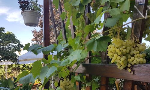 Garten-Terrasse-Wein